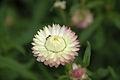 Flower-116.jpg