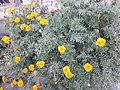 Flower20180527 185311.jpg