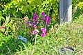 Flower (5904594127).jpg