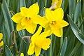 Flower 7879.jpg
