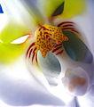 Flower face.jpg