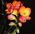 Flowers (6038098425).jpg
