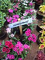 Flowers - Uncategorised Garden plants 16.JPG
