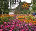 Flowers at Mainau Insel.jpg