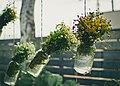 Flowers in Jars with Rain.jpg