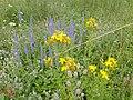 Flowers in Skansen Kielce Tokarnia (4).jpg