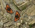 Flutterby (2817247887).jpg