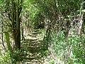 Footpath near Corton - geograph.org.uk - 1479470.jpg