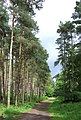 Forest Bridleway , The Rookery, Staffordshire - geograph.org.uk - 449196.jpg