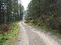 Forest Road Miterdale - geograph.org.uk - 746603.jpg
