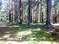 Forest bottom Spruce 120520084357.jpg