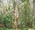 Forest near Bermeo 4.jpg