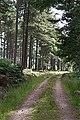 Forest road near Newlands - geograph.org.uk - 202968.jpg