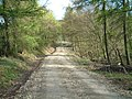 Forest track - geograph.org.uk - 164161.jpg