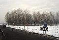 Foresta in vento - Lacchiarella - panoramio.jpg