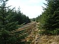 Forestry road - geograph.org.uk - 402276.jpg