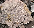 Fossiliferous mudshale (Price Formation, Lower Mississippian; Cloyds Mountain roadcut, Valley Coalfield, Virginia, USA) 6 (30494723465).jpg