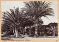 Fotografi från Cannes - Hallwylska museet - 104510.tif