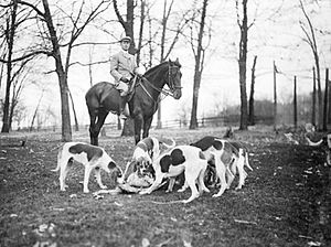 Midlothian Country Club - A rider on horseback with several hounds at a fox hunt sponsored by the members of the Midlothian Country Club.