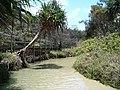 Fraser Island - Eli Creek - panoramio (1).jpg