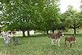 Frasnes-les-Buissenal Asinerie du Pays des Collines.jpg