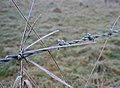 Frosted Grass and Barbed Wire (3) - geograph.org.uk - 1107169.jpg