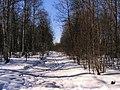 Frusen bäck vid cykelbanan i Karlbo, Vinter i Avesta 2009 - panoramio.jpg