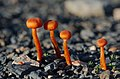 Fungi and lichen (15006105333).jpg