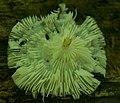Fungus, tbd - Flickr - wackybadger (1).jpg
