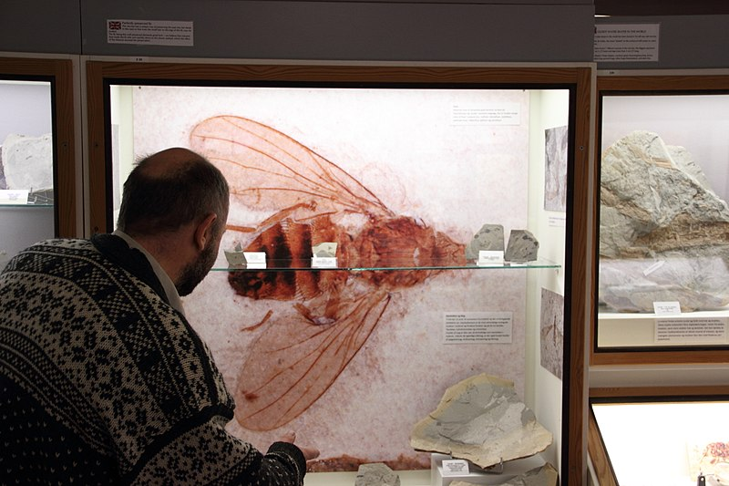 File:FurMuseum Flue i udstilling.jpg