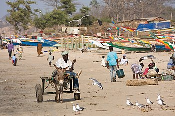 Beachside with a donkey cart in Gambia. França...
