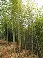 Gaobei Village - bamboo forest - DSCF3246.JPG