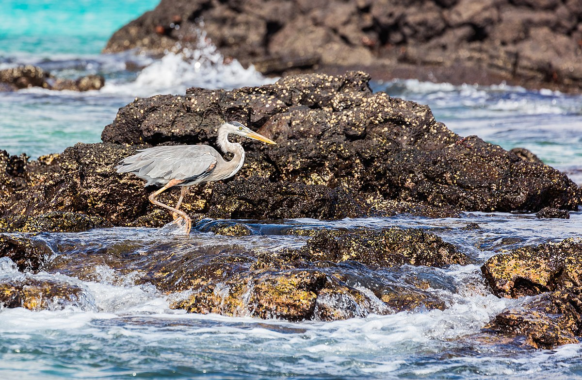 How To Get To The Galapagos Islands From Ecuador