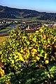 Gengenbach und der Wein. 04.jpg
