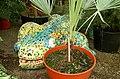 Giant lizard in Palm House, Botanic Gardens, Belfast.jpg