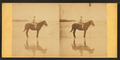 Girl on horseback in the beach, from Robert N. Dennis collection of stereoscopic views.png