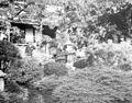Golden Gate Park – Japanese garden (5167675909).jpg