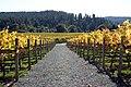 Goldeneye Winery - 6386063277.jpg
