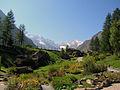 Gran Paradiso visto dal Giardino alpino Paradisia.JPG