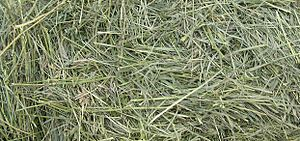 Close view of grass hay