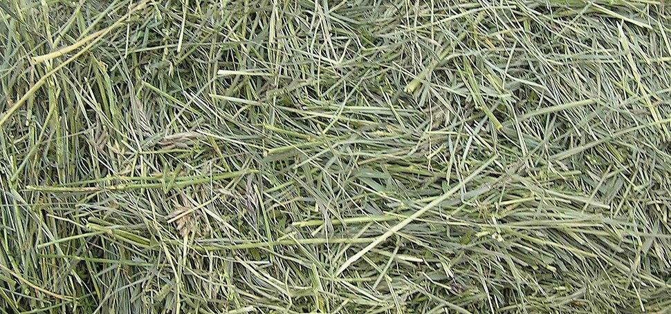 GrassHay1