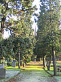 Graveyard, Great Warley, Essex - geograph.org.uk - 82248.jpg