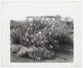 Gray gardens robert carmer house2.tif