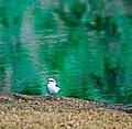 Green Reflection (3316056637).jpg