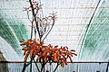 Greenhouses in qom عکس های گلخانه دنیای خار در روستای مبارک آباد قم 03.jpg