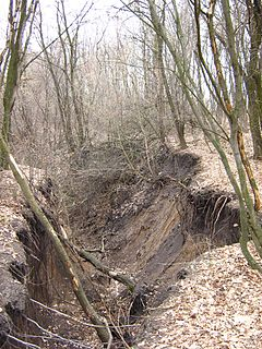 Gully Landform created by running water and/or mass movement eroding sharply into soil