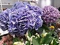 HK SW 上環 Sheung Wan 普仁街 11 Po Yan Street Tower 125 shop Hapi Store flora flowers August 2020 SS2 01.jpg