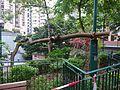HK Sheung Wan 卜公花園 Blake Garden 洋紫荊 tree trunk wood Aug 2016 DSC.jpg