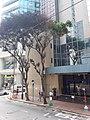 HK WC tram view 灣仔 Wan Chai 莊士敦道 Johnston Road Hennessy Road September 2019 SSG 02.jpg