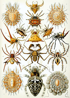 Class of arthropods